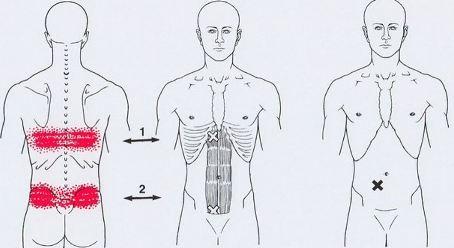 жир в косых мышцах живота