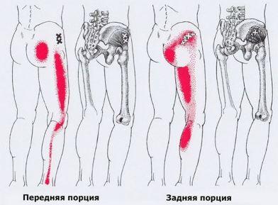 Ягодичные мышцы схема
