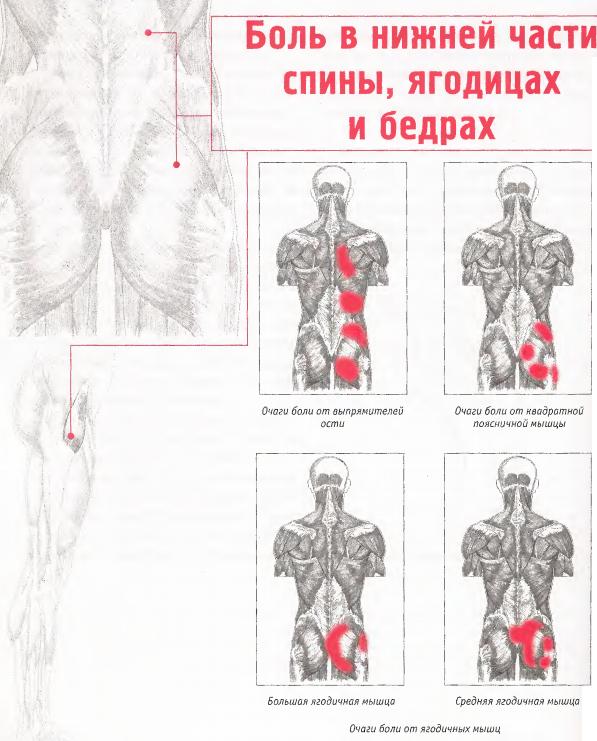 Почему болит правый бок со стороны спины