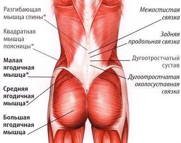 Болит сустав таз мышца хрустят суставы ногах