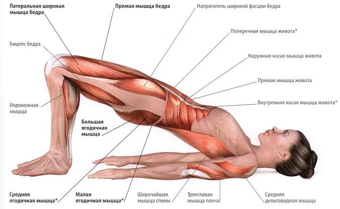 Приводящая мышца бедра накачать в домашних условиях