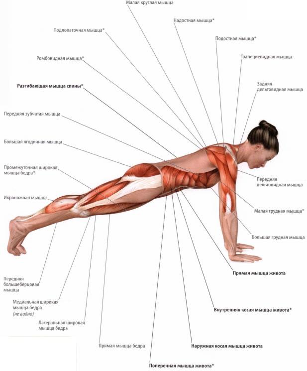 мышцу как подтянуть мышцы лица силой мысли меня