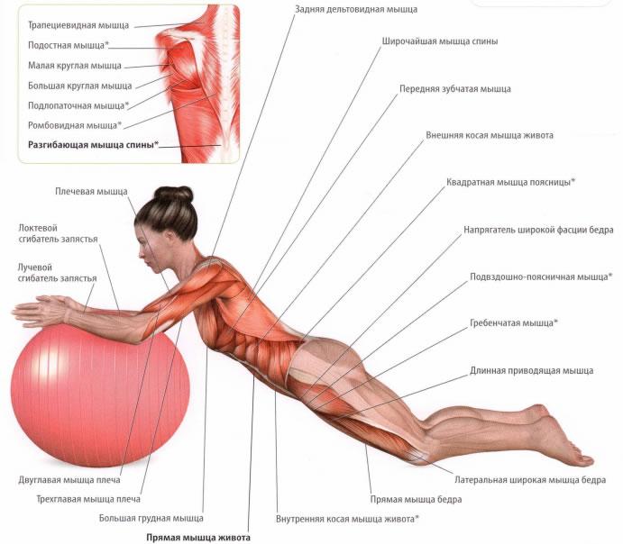 Болят мышцы спины и живот